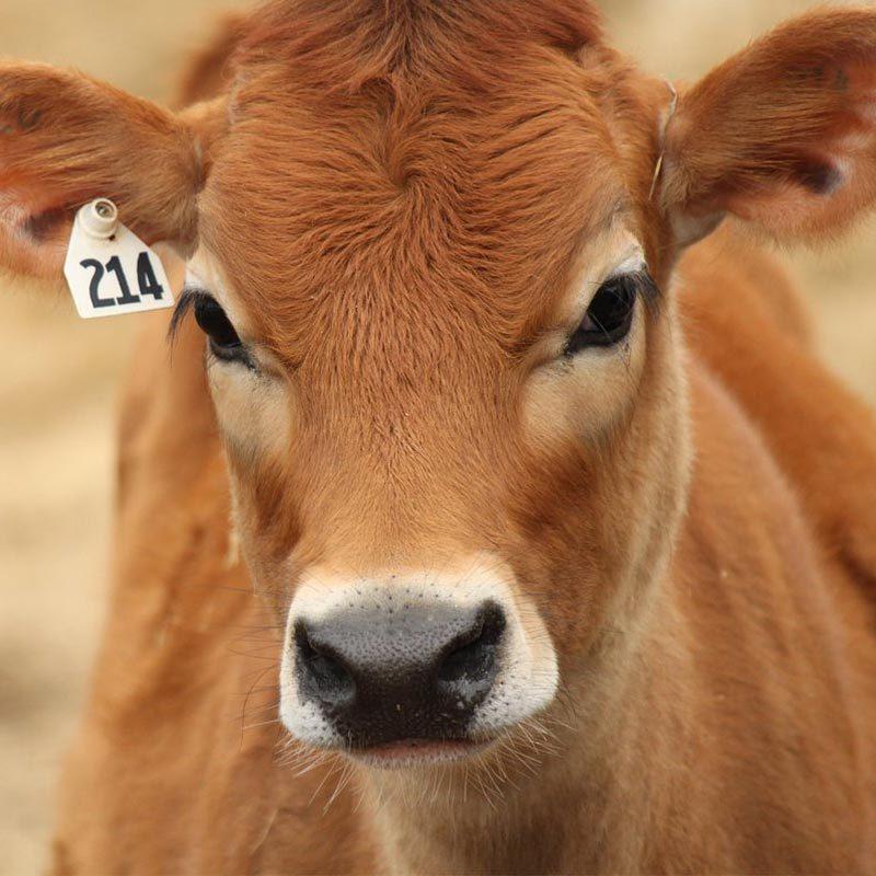 Food Animal Health Sales Force Optimization